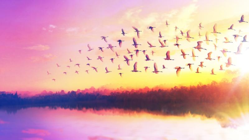 Maisemakuva, jossa metsää ja järjenranta iltahämärässä, kuvan väri violetti ja kellertävä.. Lintuparvi lentää taivaalla.