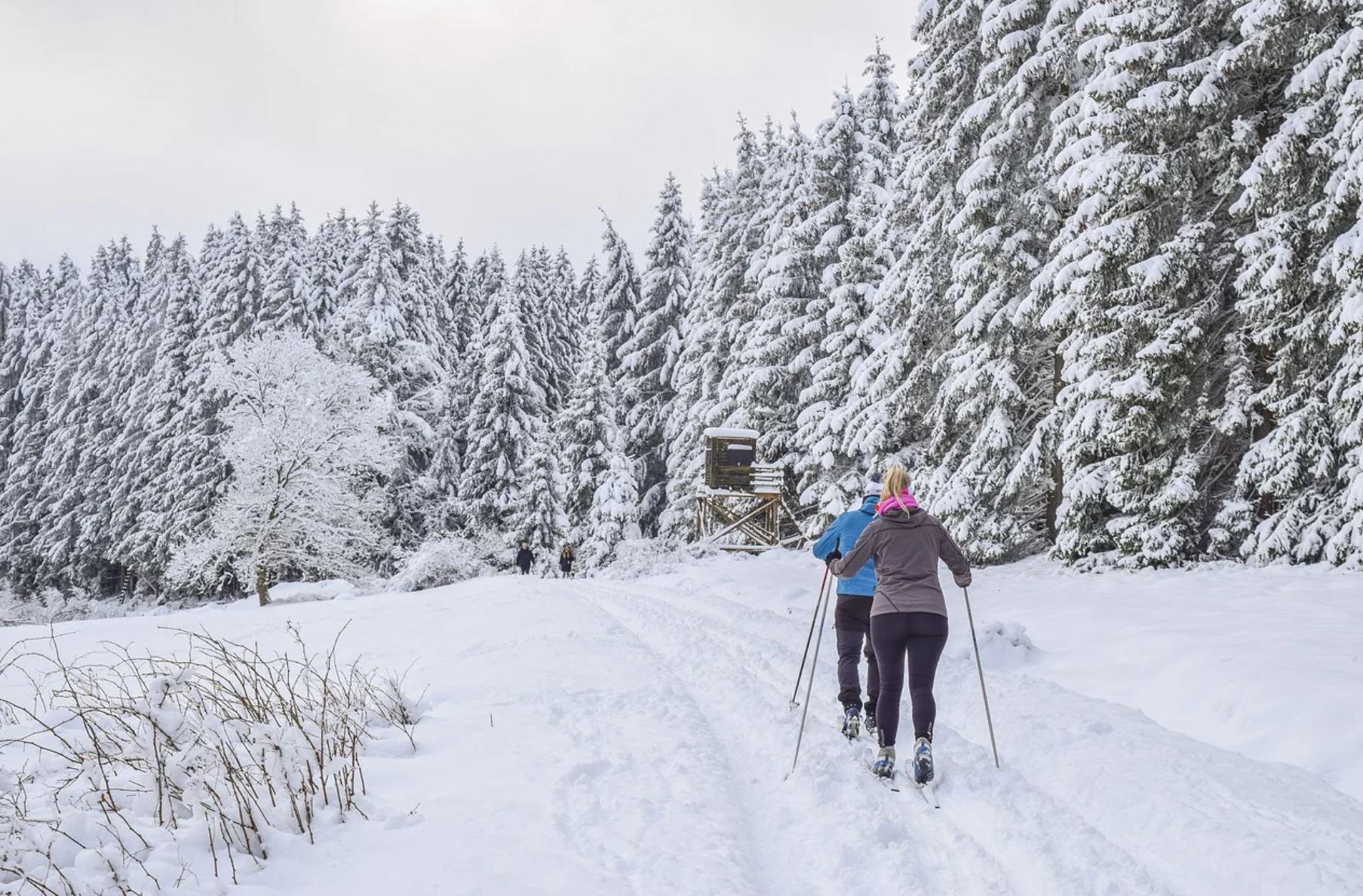 Kaksi hiihtäjää lumisessa maisemassa kuusimetsän reunalla